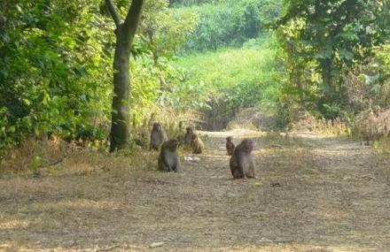 太行山猕猴自然保护区