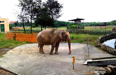 宁波雅戈尔动物园门票价格