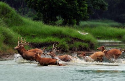 麋鹿保护区