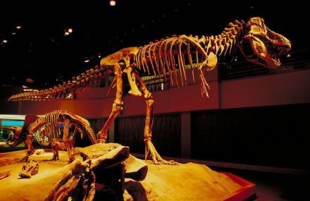 中生代恐龙化石厅