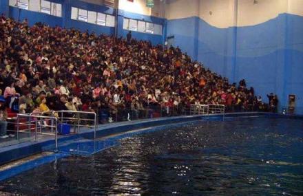 曲江海洋世界