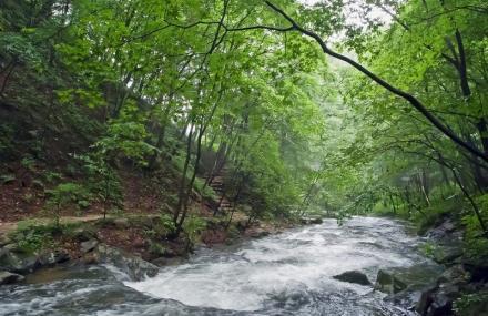 绿石谷国家森林公园