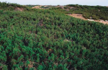 神木臭柏自然保护区