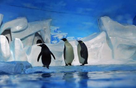 天津极地海洋馆