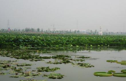荷塘月色湿地公园