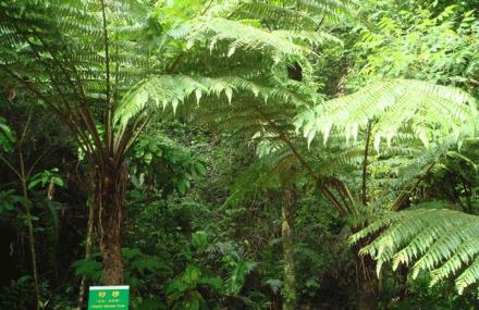 恐龙时代动植物厅
