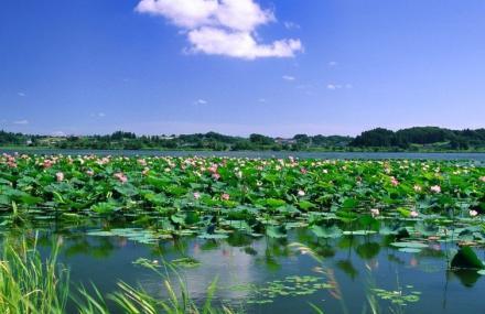 后湖生态园