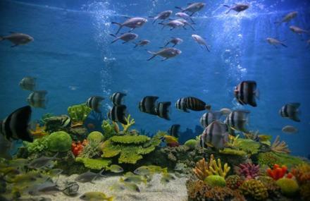 合肥海洋世界