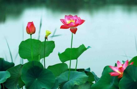 龙湖国家湿地公园