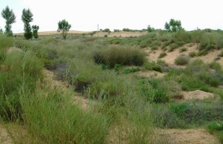 毛乌素沙漠