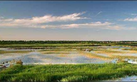 黄河三角洲