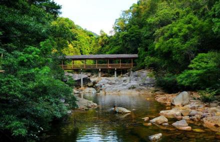 格氏栲自然保护区