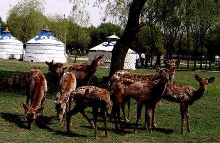 成吉思汗草原生态园