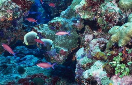 鑫海洋水族馆