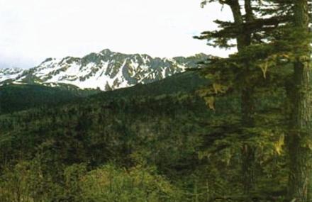 苍山自然保护区
