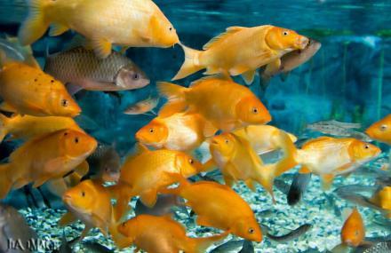 壁纸 海底 海底世界 海洋馆 水族馆 440_285