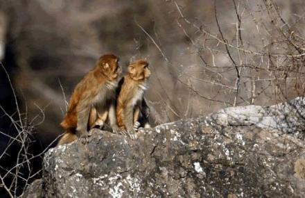 云台山猕猴谷