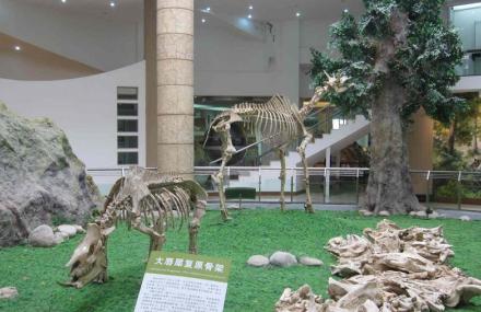 古生物化石博物馆