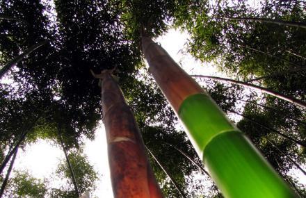 绿竹风情园