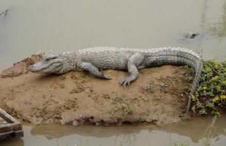重庆鳄鱼中心
