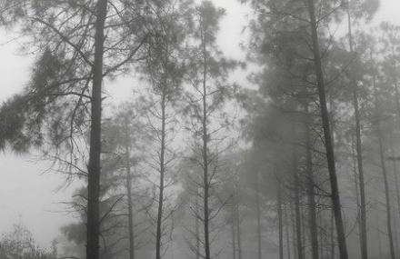 龙架山国家森林公园