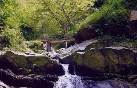 五尖山森林公园