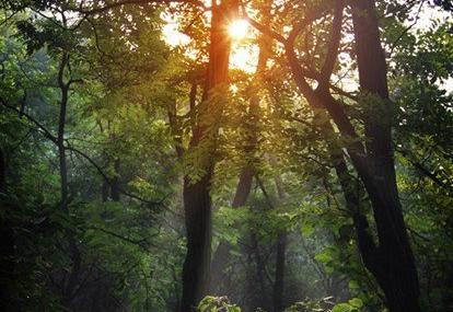 渭南方山森林公园