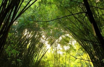 滨江森林公园