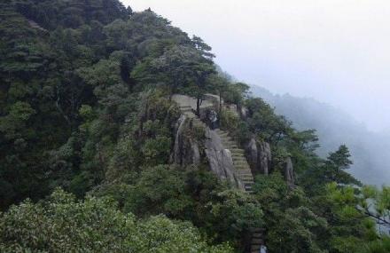 通天箩原始森林