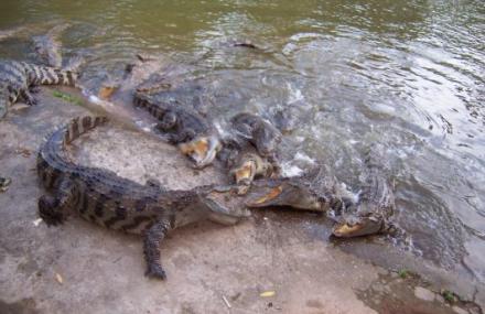 三水森林公园鳄鱼湖
