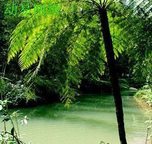 桫椤自然保护区