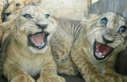 青岛黄岛野生动物园门票价格