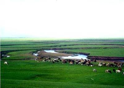 呼和诺尔草原