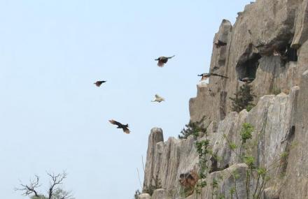 沈阳鸟岛公园