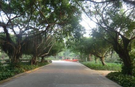 有没有人去过湛江森林公园的.知道里面有什么好玩的图片