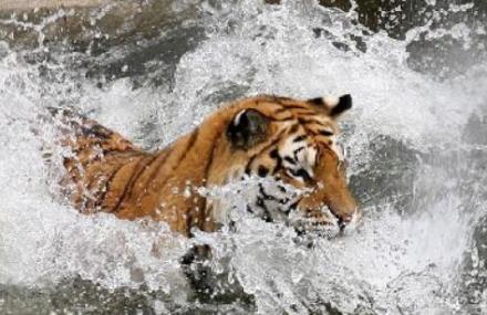 跑马岭野生动物世界
