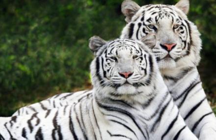 济南跑马岭野生动物世界