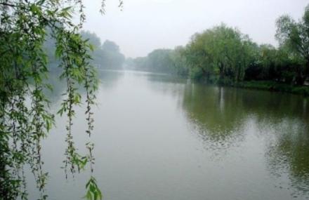 柳树王景区