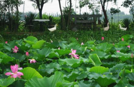 河口孤島植物園