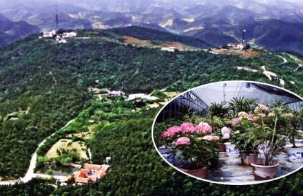 植物园内已有100多个景点,30多个花卉园,规划中的四方山风景区占地1.